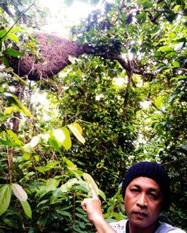 Madu Hutan 500g